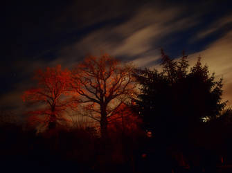 Full moon along the trees by gdrauvniedr