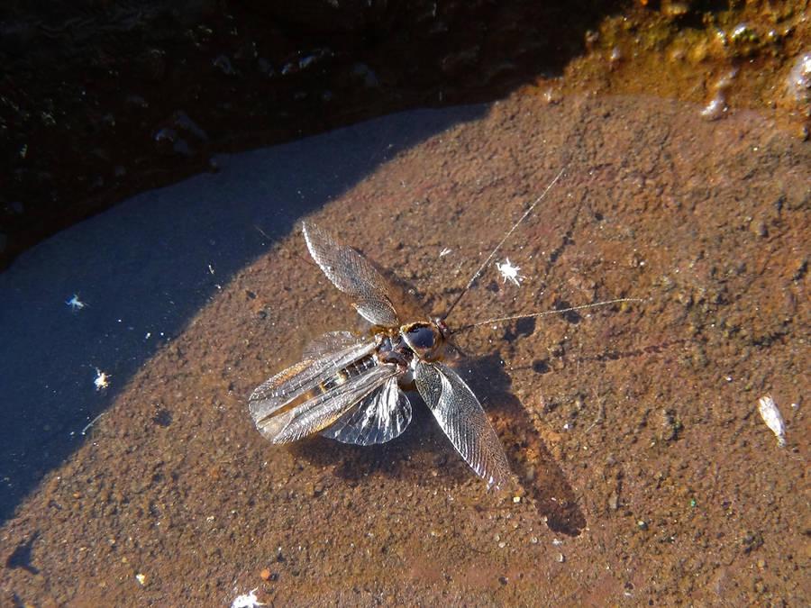 [Imagem: poor_insect_by_tamatchi_d5l9vtx-fullview.jpg]