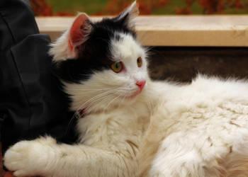 Kitty by quo-fata-ferunt