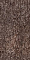 Tree bark - texture, pattern by ivangraphics