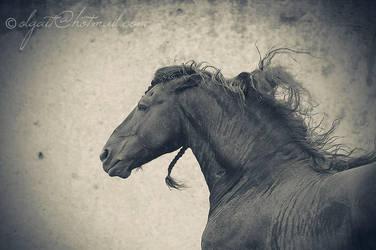 The beast by Olga5
