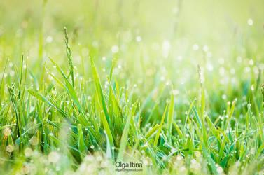 morning dew by Olga5