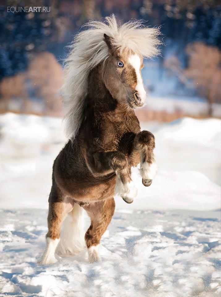 miniature Stallion by Olga5