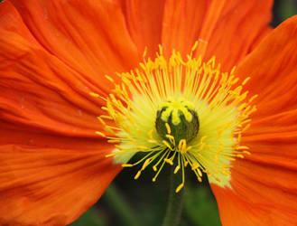 Garden Urchin by smolensk65