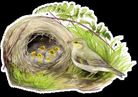 At the nest by Tuonenkalla