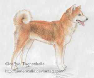 Akita by Tuonenkalla
