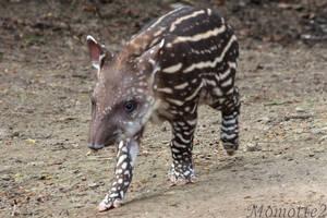 Charming baby tapir by Momotte2