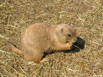 Easter's prairie dog by Momotte2