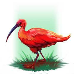 Scarlet Ibis by antonio-panderas