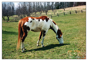 Hidalgo - The Real Horse by blitzgun