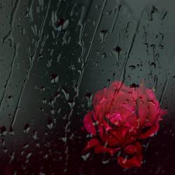 Another rainy night by ShinyWish