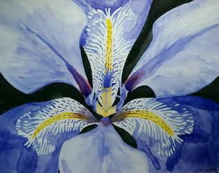 Iris by geekinggirl84