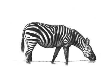 Zebra by unusualworlds