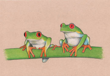 Red Eye Tree Frogs by unusualworlds