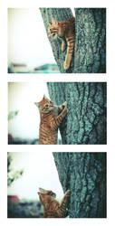 Tree climber by CherishKay