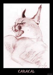 Animal Studies: Caracal by inner-diversity