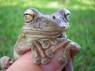Frog I by xsoapybubblesx