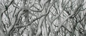 Halloween trees by ellejayess