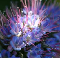 Purple spring by ellejayess