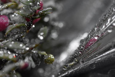 Perhaps Rain by LaraBLN