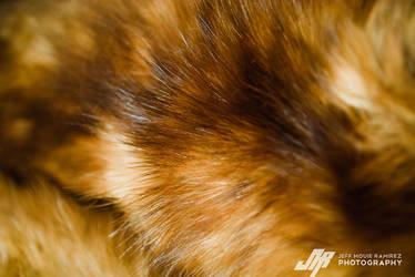 Fur2 by JMou