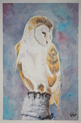 Barn Owl | Watercolour by Jiru-tan