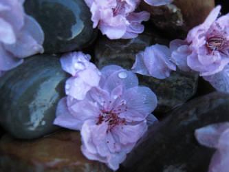 Beautiful Spring Flowers by BeyondThisUniverse