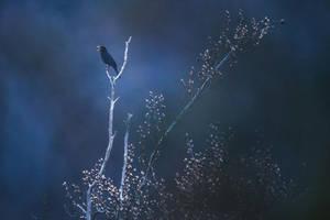 Blackbird by mescamesh