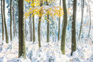 Hibernal autumn forest by mescamesh