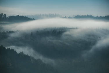 Spring Fog by mescamesh