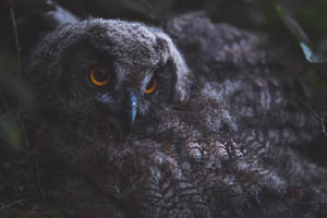 Young Eagle Owl by mescamesh