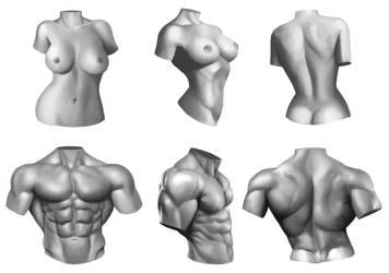 Male/Female anatomy torso study by Xelgot