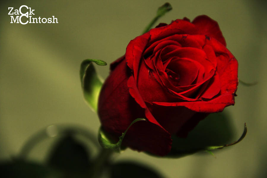 Love and Beauty by ZackMcIntosh