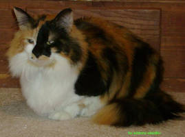 Malise my kitty by Seraphim-Azriel