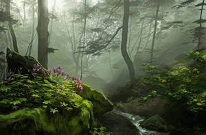 Forest Study by Selenada