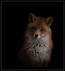 Fox by Lilia73