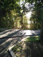 Rays passing trees by HannaThePanda