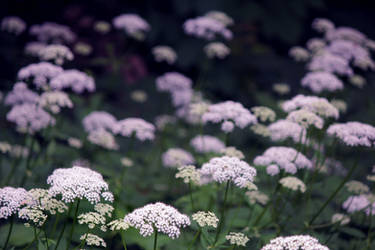 Fleurs de l'infini by charlopunk