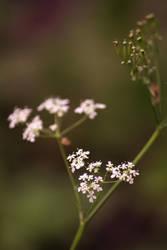 Tiny flowers by charlopunk