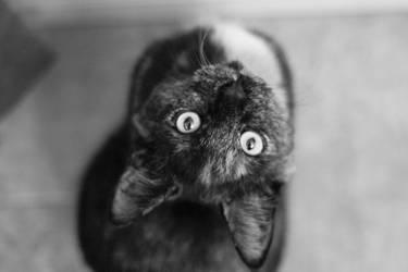 Cat by charlopunk
