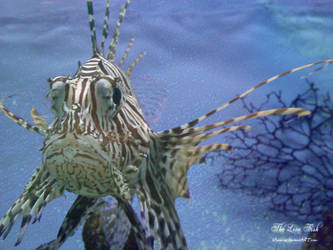 The Lion Fish by Venorize