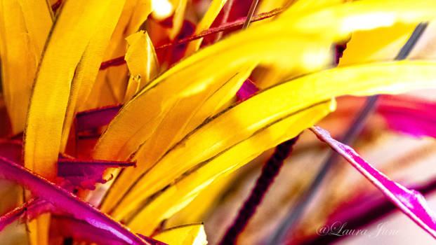 Colors! by LashyJ