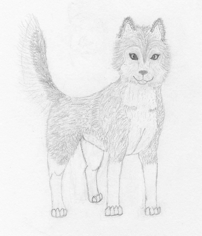 Siberian Husky Sketch By Webkinz762 On Deviantart