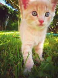 kitty kitty by Lenny-art