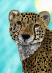 Cheetah - ACEO by Varenx