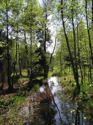 Swamp by Sparsko