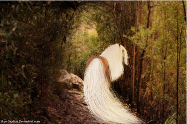 Walk in the forest - welcoming spring by Skye-Studios