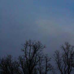 Tree ghosts :: 2.21.17 by Skye-Studios