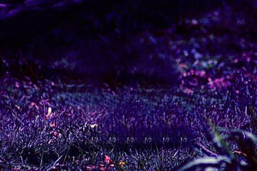 Abstract Grass by VexylGraphics