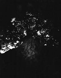 Pinhole - Tree by Redscrewdriver